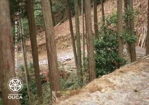 2013.4.11櫻花の宇治抹茶05