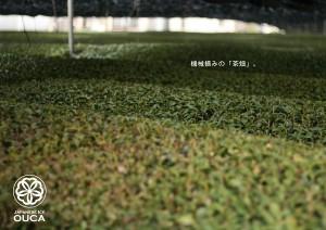 2013.4.11櫻花の宇治抹茶09