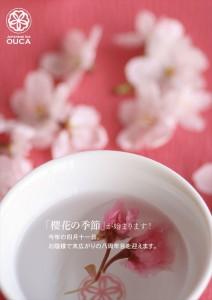 2015.3.22櫻花の季節が始まります!