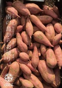 2015.8.19種子島「安納芋畑」01