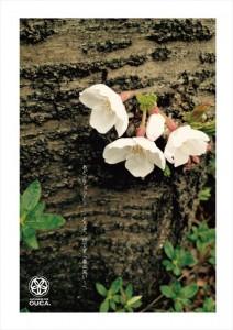 2016.3.22目黒川の桜まつり(櫻花の提灯がようやく設置)01