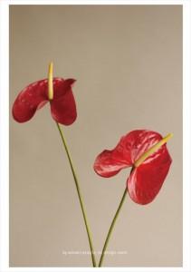 2016.9.5ウィンウィンアソシエ(お花の盛り付け研修)デザイン室07