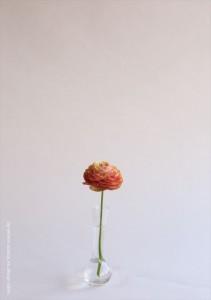 2017.3.13株式会社ウィンウィンアソシエ(お花の盛付け)13