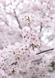 2017.4.11ジャパニーズアイス櫻花(10周年記念)03