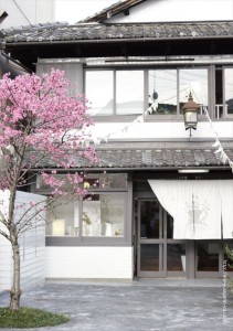 2017.4.15嵯峨野湯の春「菊桃の木」07